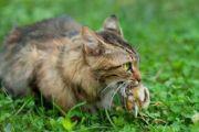 Svobodne mačke